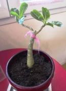 photo client- baobab intérieur 2