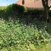 photo clients grille de jardin à grosse fleurs