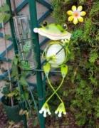 photo client- pluviometre grenouille