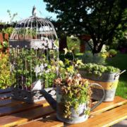 photo client-jardin-jardinière et lanterne