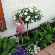 photo clients - jardin - flammad rose